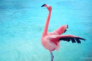 The Mystery Of The Pink Flamingo 10